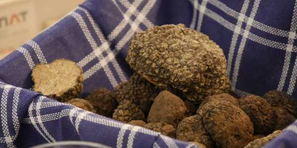 Truffles: black treasure in Umbria!